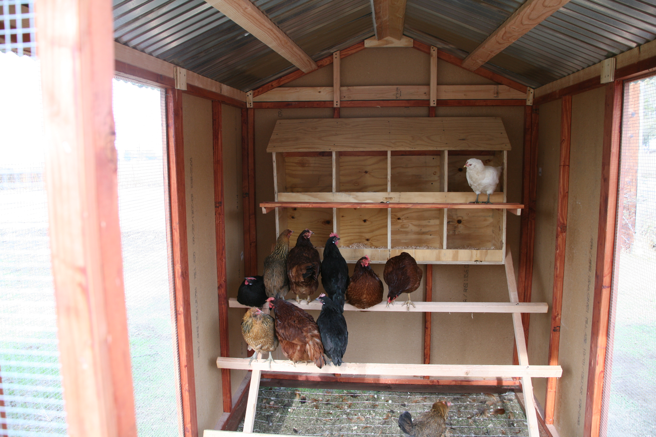 backyard chicken coop - Chicken Coop Design Ideas